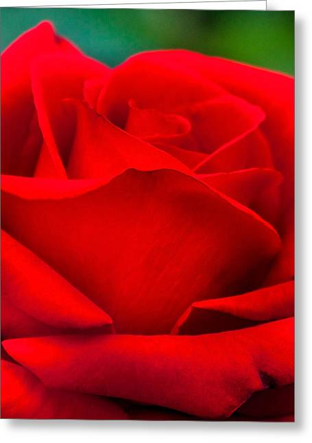 Photos Of Autumn Greeting Cards - Red Rose Petals 2 Greeting Card by Az Jackson