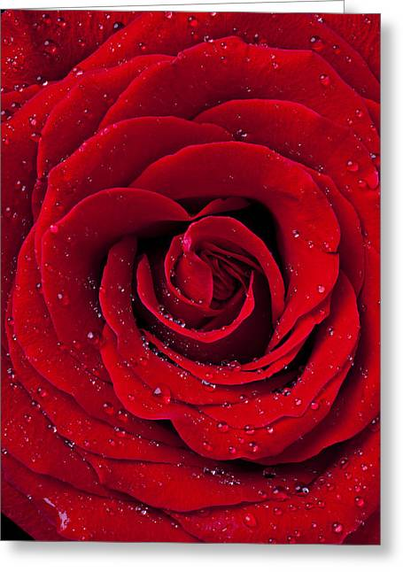 Wet Petals Greeting Cards - Red Rose With Dew Greeting Card by Garry Gay