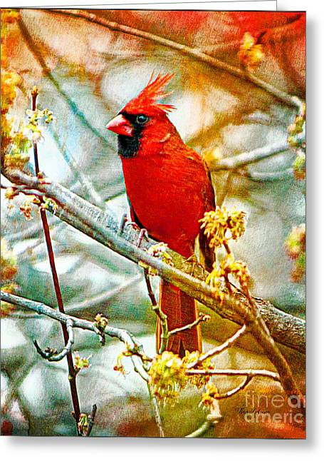 Northern Cardinal Photo Greeting Cards - Red Royalty Greeting Card by Tina  LeCour