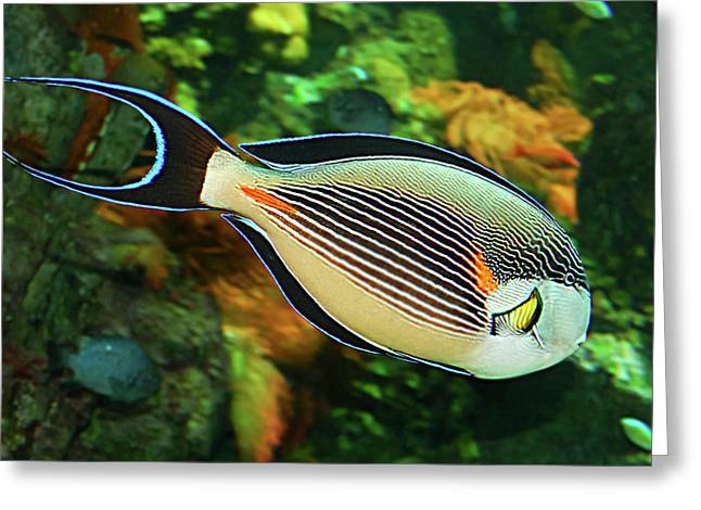 Animals Love Greeting Cards - Red sea fish Greeting Card by Alessandro Matarazzo