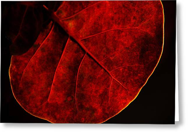 Plants Greeting Cards - Red Sea Grape Greeting Card by Susanne Van Hulst