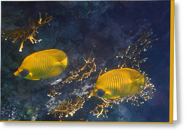 Decorative Fish Greeting Cards - Red Sea Masked Butterflyfish 1 Greeting Card by Johanna Hurmerinta