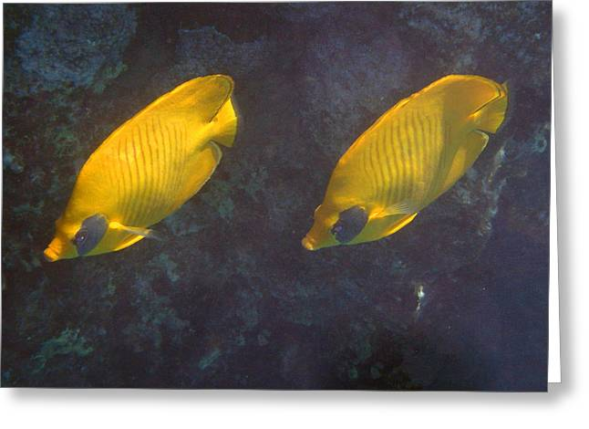Decorative Fish Greeting Cards - Red Sea Masked Butterflyfish Greeting Card by Johanna Hurmerinta