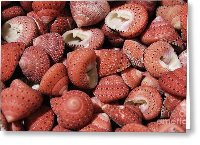 Red Sea Shells Greeting Card by Paulette Thomas