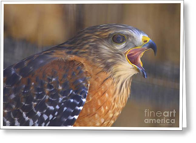 Red Shoulder Hawk Greeting Card by Deborah Benoit