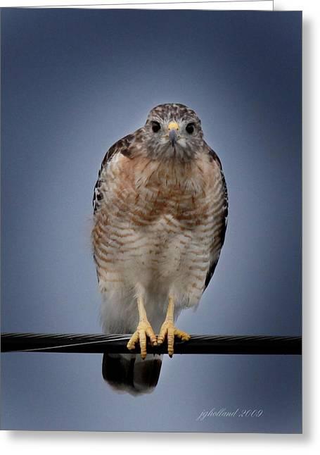 Red Shoulder Hawk Greeting Card by Joseph G Holland