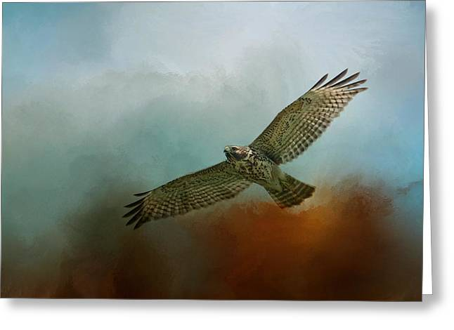 Red-shouldered Hawk Greeting Cards - Red Shoulder In Autumn Greeting Card by Jai Johnson