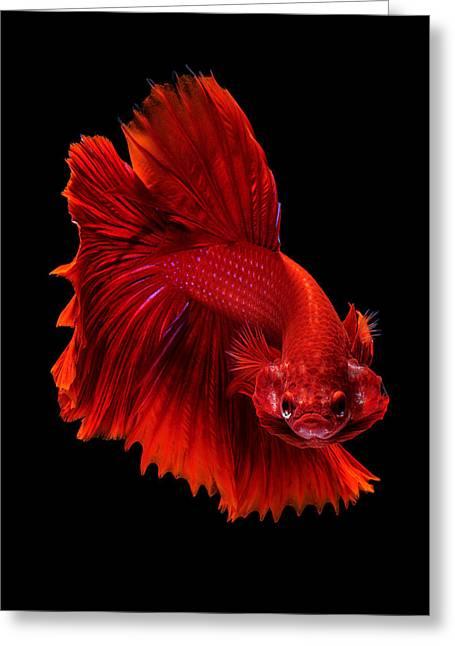 Betta Greeting Cards - Red siamese fighting fish Greeting Card by Jirawat Plekhongthu