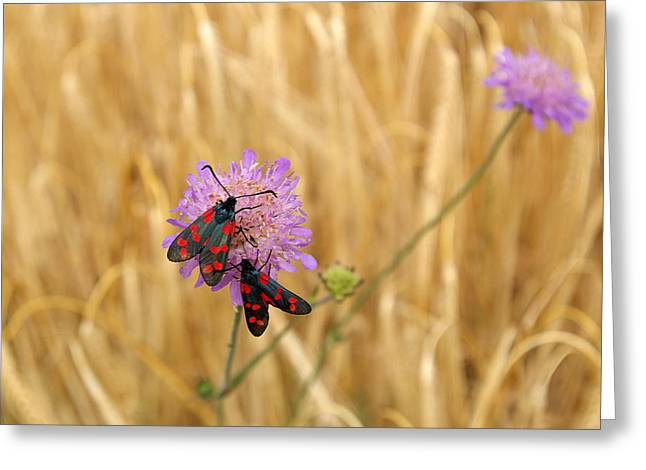 Red Spotted Couple In Wheat Field Greeting Card by Jessica Rose