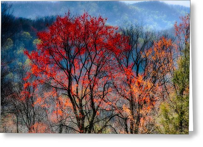 Red Spring Greeting Card by Irene Abdou