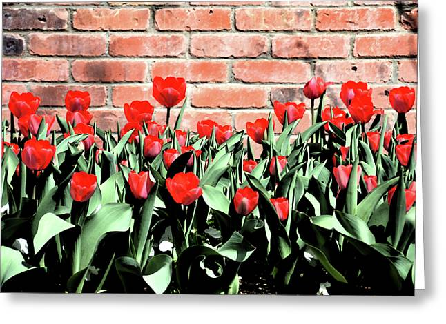 Red Spring Tulips 2 Greeting Card by Angelina Vick