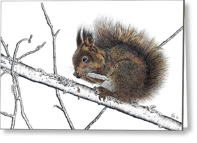 Pen And Ink Drawing Greeting Cards - Red squirrel Greeting Card by Hanneke Messelink-Anders