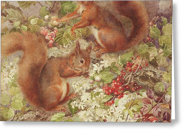 Red Squirrels Gathering Fruits And Nuts Greeting Card by Rosa Jameson