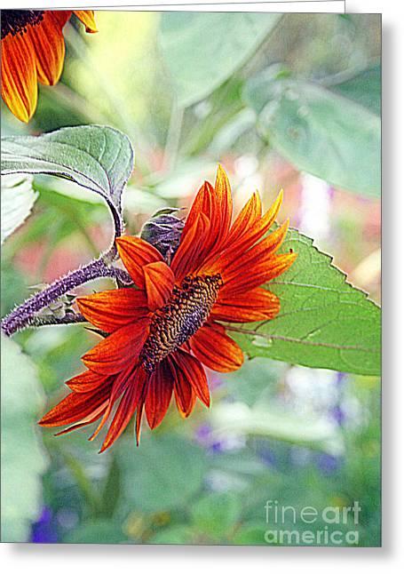 Floral Digital Art Digital Art Greeting Cards - Red Sunflower Greeting Card by Kay Novy