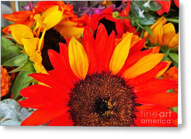 Bloosom Greeting Cards - Red Sunflower With Three Yellow Leaf Greeting Card by Jasna Gopic