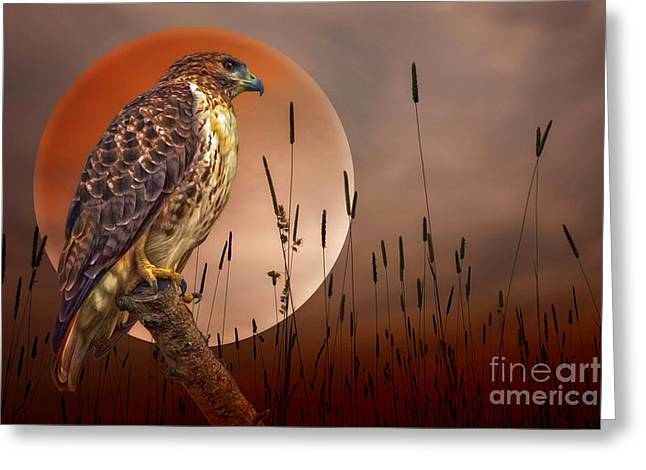 Red Tail Hawk Photo Greeting Cards - Red Tail Hawk At Rest Greeting Card by Tom York Images