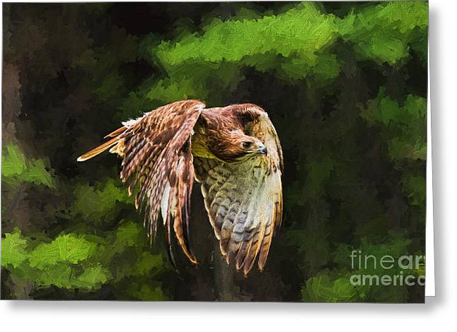 Biology Greeting Cards - Red Tail Hawk Greeting Card by Les Palenik