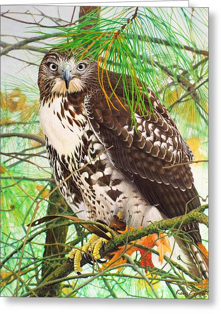 Red Tail Hawk, Thistle Greeting Card by Ken Everett