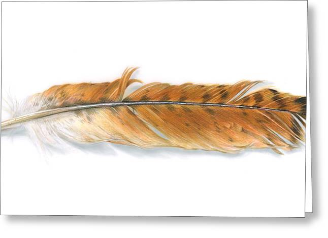 Hawk Drawings Greeting Cards - Red-tailed Hawk feather Greeting Card by Logan Parsons