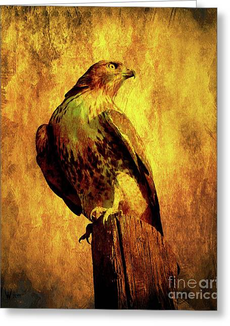 Red-tailed Hawk Greeting Cards - Red Tailed Hawk . texture . 40D10167 Greeting Card by Wingsdomain Art and Photography