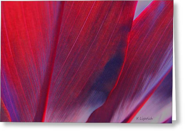 Kerri Ligatich Greeting Cards - Red Ti Leaves at Last Light Greeting Card by Kerri Ligatich