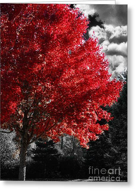 Trees In Autumn Greeting Cards - Red Tree Greeting Card by Mindy Sommers