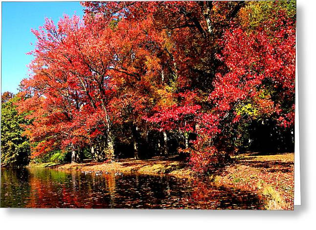 Lakes Greeting Cards - Red Trees by Lake Greeting Card by Susan Savad