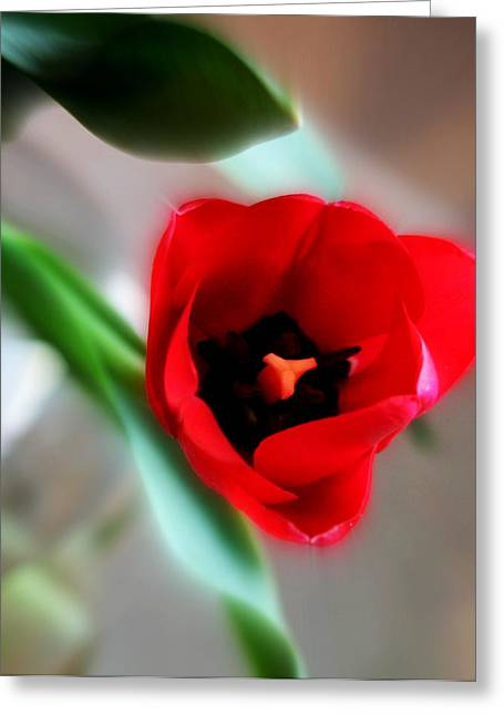 Northwest Flowers Greeting Cards - Red Tulip Greeting Card by Cathie Tyler
