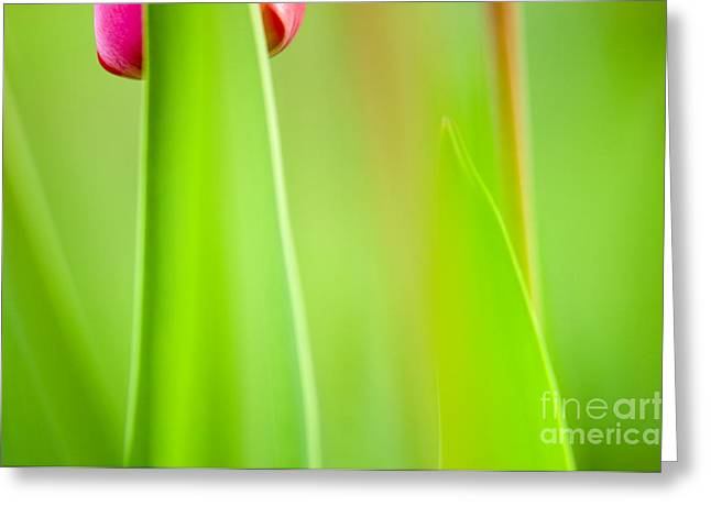 Flowers Greeting Cards - Red Tulip Greeting Card by Silke Magino