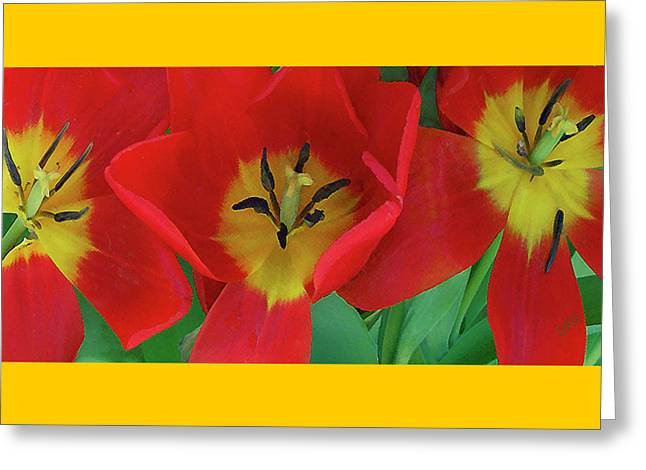Red Tulip Trio Greeting Card by Ben and Raisa Gertsberg