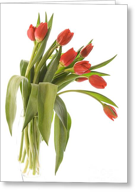 Showcase Greeting Cards - Red Tulips Greeting Card by Ann Garrett