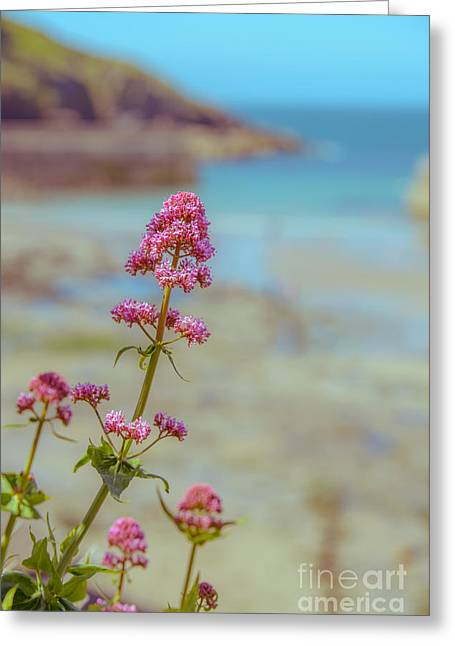 Red Valarian At Port Isaac Greeting Card by Amanda And Christopher Elwell