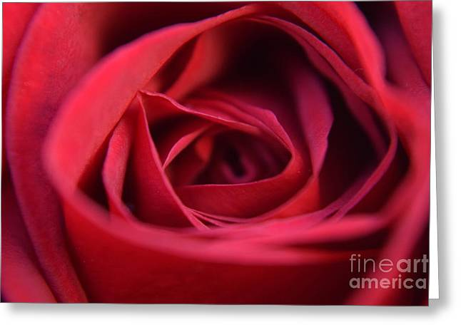 Stigma Greeting Cards - Red Velvet Greeting Card by Anna Iliescu