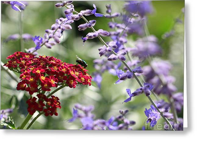 Shades Of Red Greeting Cards - Red White And Blue Greeting Card by Carol Komassa