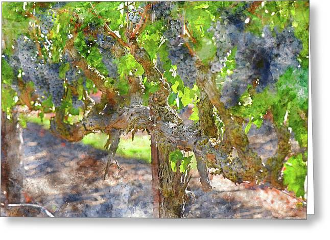 Red Wine Grapes In The Napa Vineyard Greeting Card by Brandon Bourdages