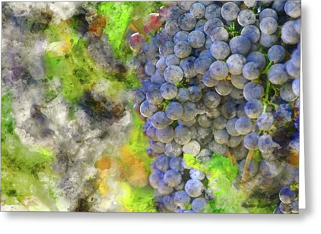 Red Wine Grapes On The Vine In Napa Greeting Card by Brandon Bourdages