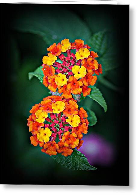Kayecee Spain Greeting Cards - Red Yellow and Orange Lantana Greeting Card by KayeCee Spain