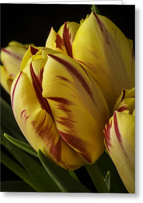 Rain Drop Greeting Cards - Red Yellow Tulip Greeting Card by Garry Gay