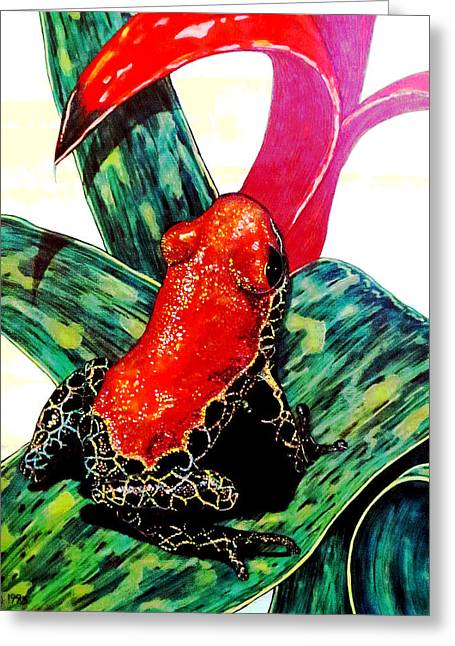 Tree Frog Greeting Cards - Redback Poison Frog Greeting Card by Debbie Chamberlin