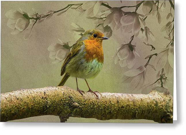 Redbreast Bird Greeting Card by Movie Poster Prints