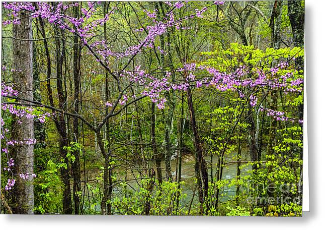 West Fork Greeting Cards - Redbud in the Rain Greeting Card by Thomas R Fletcher