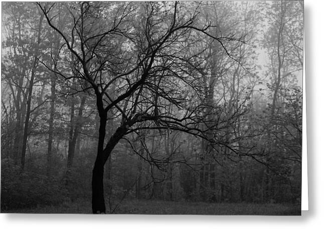 Southern Indiana Photographs Photographs Greeting Cards - Redbud in Winter Greeting Card by Lowell Anderson