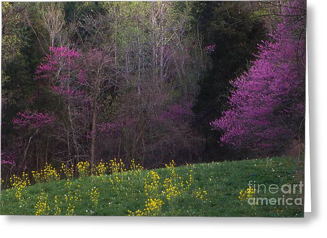 Southern Indiana Photographs Photographs Greeting Cards - Redbuds and Green Fields Greeting Card by Lowell Anderson