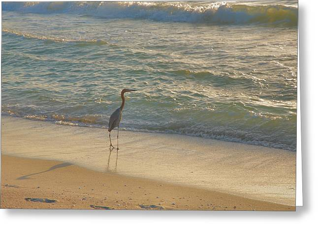 Heron Greeting Card Greeting Cards - Reddish Egret In Surf Greeting Card by Steven Ainsworth