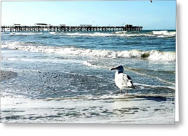 Redington Beach Fishing Pier Seascape Greeting Card by Scott D Van Osdol