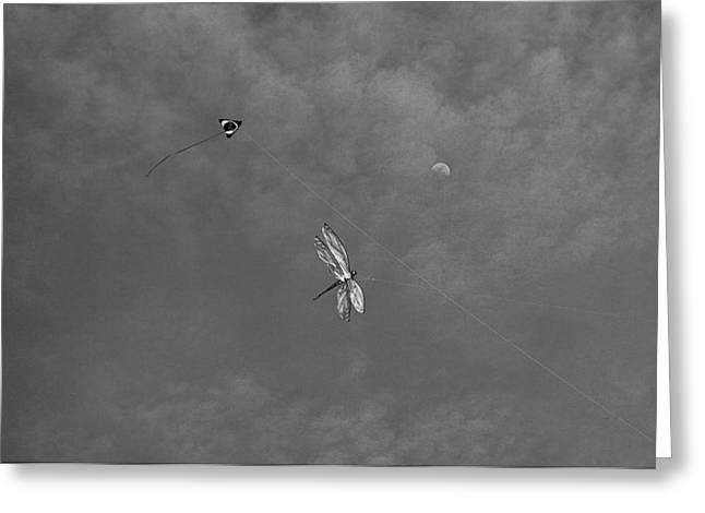 Kite Greeting Cards - Redondo Beach Kites Greeting Card by Robert Meyers-Lussier