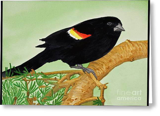 Appleton Paintings Greeting Cards - Redwing Blackbird Greeting Card by Norma Appleton