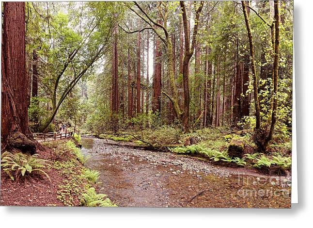 Redwood Creek Peacefully Flowing Through Muir Woods National Monument - Marin County California Greeting Card by Silvio Ligutti