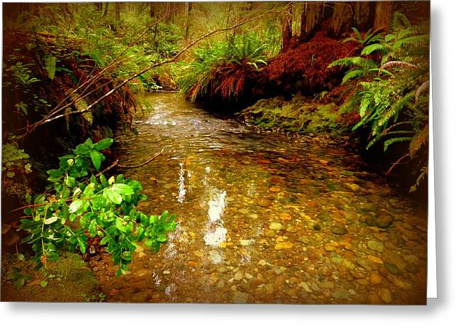 Redwood Stream Reflections Greeting Card by Cindy Wright