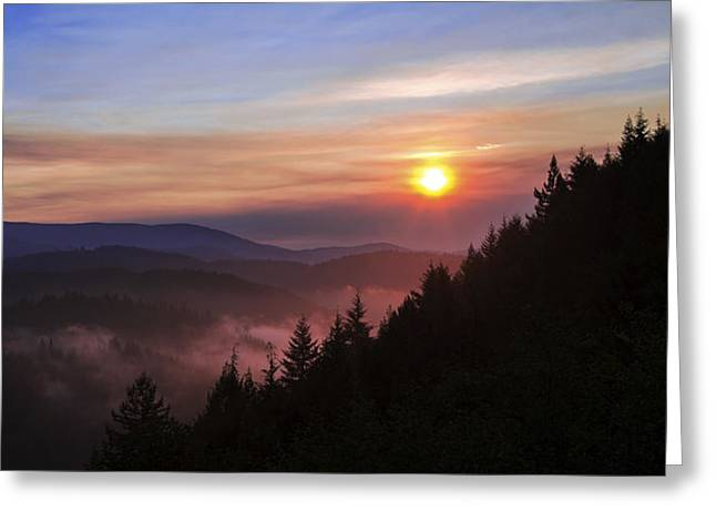 Redwood Sun Greeting Card by Chad Dutson